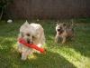Frisbee et Hera