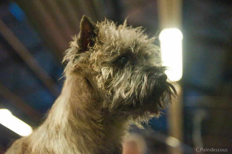 Hera : CACIB et CACS au Paris Dog Show