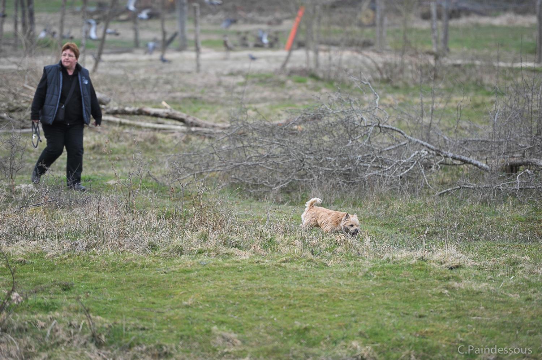 Idiv nous a débusqué  un lapin dans son terrier. Quelle poursuite !!!