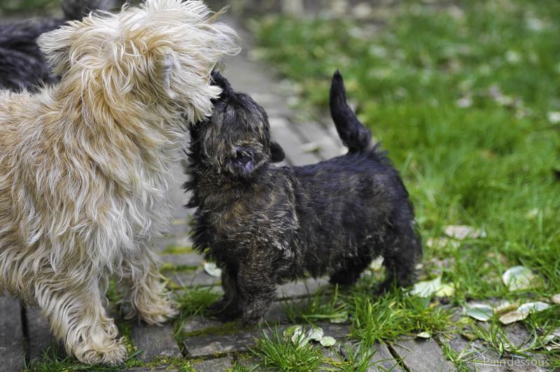 Milko joue avec sa maman