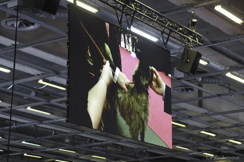 On est même filmé et avec en plus l'affichage sur écran géant et sur internet en direct !!!