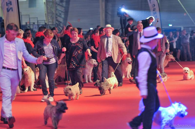 Sur le ring d'honneur, présentation des Terriers d'Ecosse