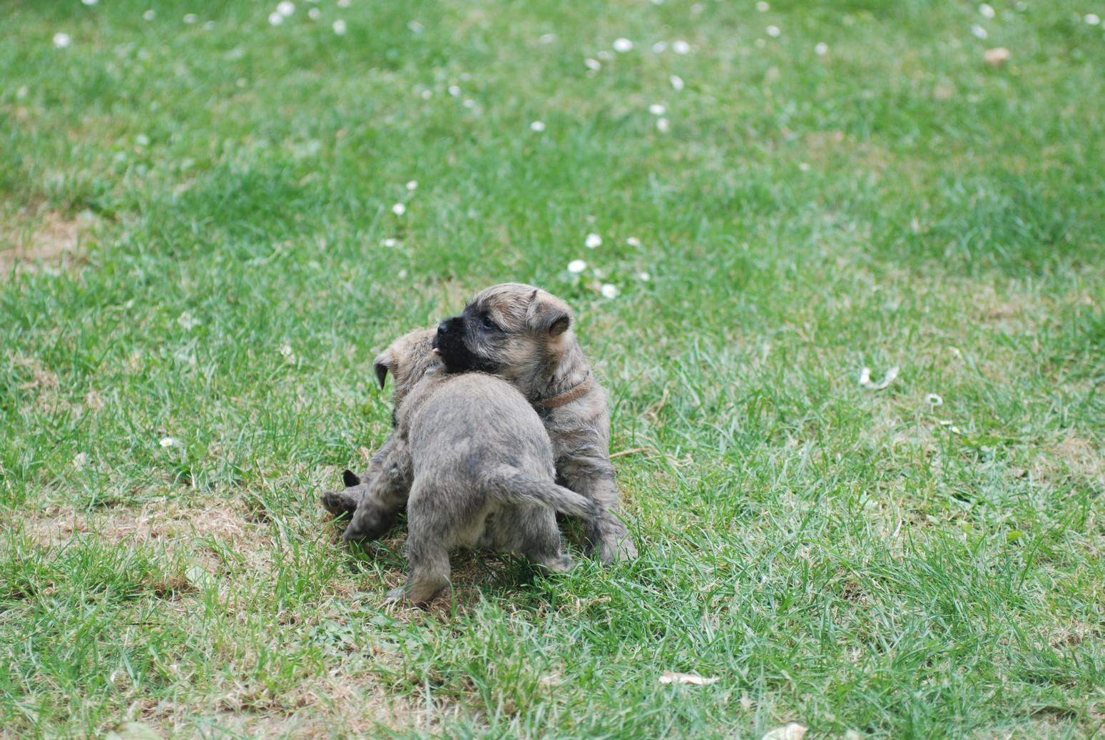Les 2 petits males aiment se battre !