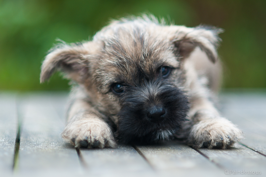 20/08/16 - Murphy - le petit caïd si affectueux et trop craquant !