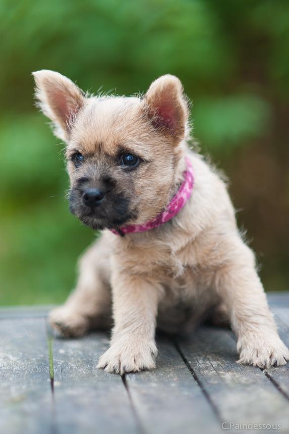 20/08/16 - Maya une petite chienne très féminine avec une tête très expressive !