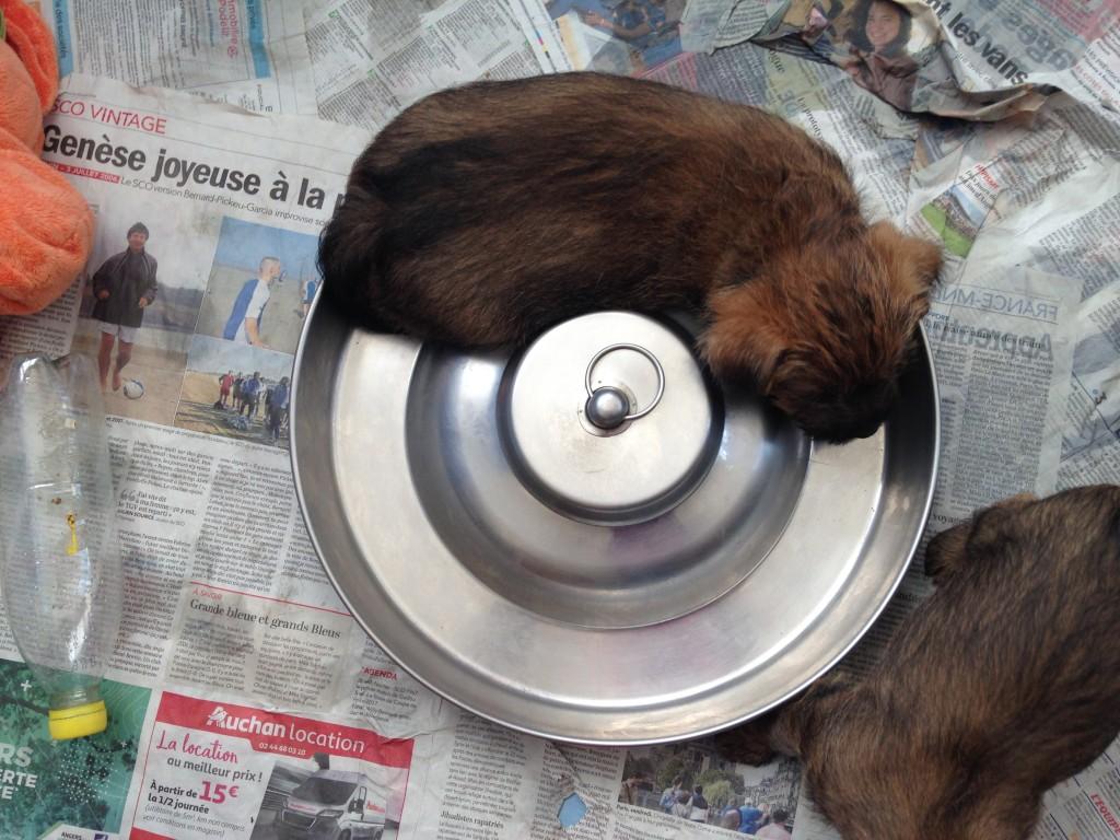 Porthos qui adore dormir dans la gamelle !!!!