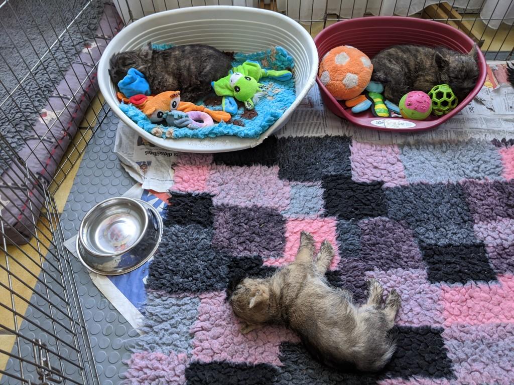 Et oui il arrive que la petite princesse préfère les couvertures plutôt que les paniers !